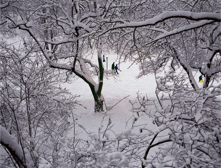 Great Snowfall of 2000, Central Park (Manhattan)